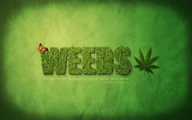 Weeds. Косяки/Дурман. 1 сезон